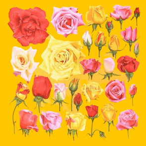 roses on yellow
