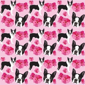 Boston Terrier Dog and flowers