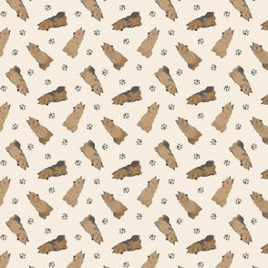Tiny Australian Terriers - tan