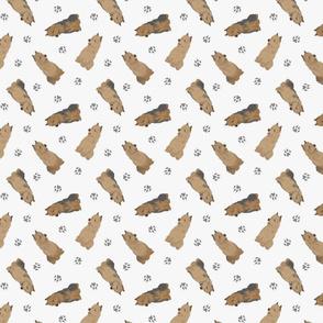 Tiny Australian Terriers - gray