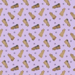 Tiny Australian Terriers - purple