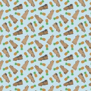 Tiny Australian Terriers - pineapples