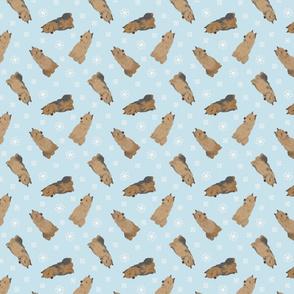 Tiny Australian Terriers - winter snowflakes