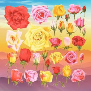 roses on rainbow runset