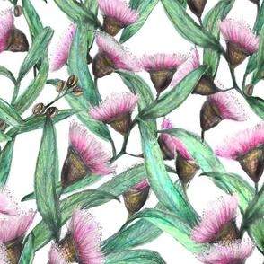 Pink Wattle Flowers