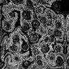 Florasquiggles_07212020-3_cv7large-mirror