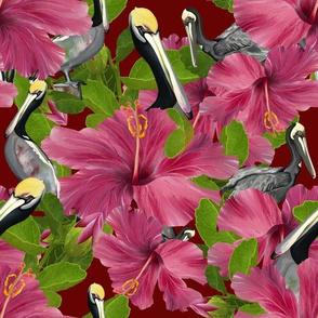 Pelicans hiding in the Hibiscus