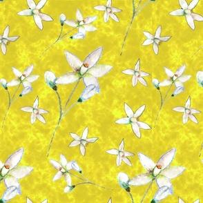 Blossom on Yellow