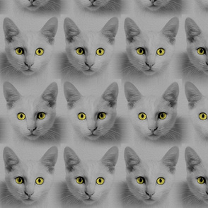Cats: Grey and Yellow