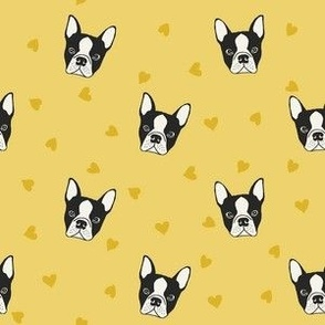 Yellow French bulldog heads
