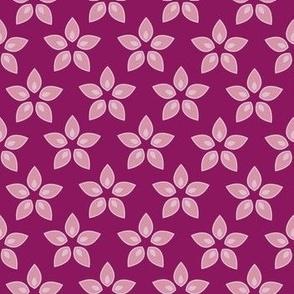 Pink Blooming Star Flower