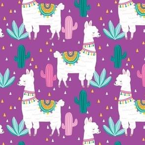 cute alpaca llama