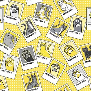Pawtone World of Cat Colors in Illuminating Yellow