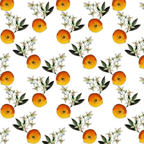 Oranges & Blossom On White