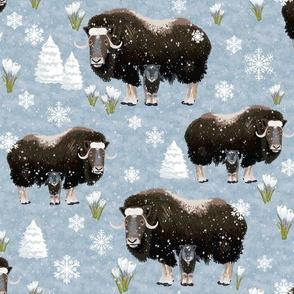 Alaskan Musk Ox & Calf