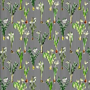 Snowdrops on black stripes