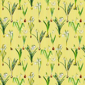 Snowdrops on dark yellow stripes