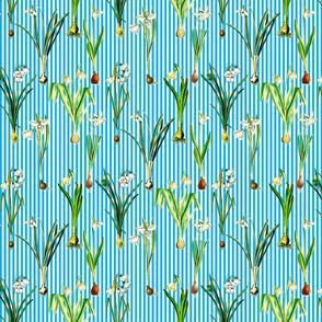 Snowdrops on sky blue stripes
