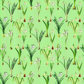 Snowdrops on sprin green stripes