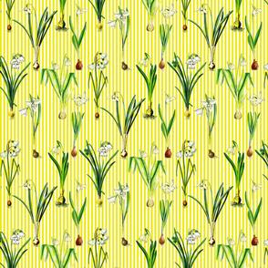 Snowdrops on sun yellow stripes