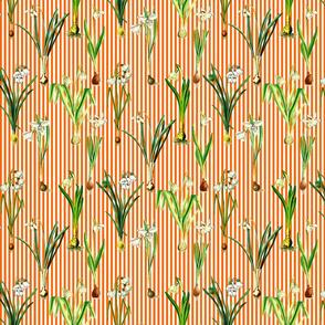 Snowdrops on orange stripes