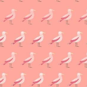 Shoreline Gull