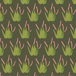 Safari Plants