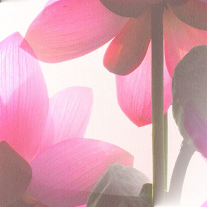 Lotus Flare