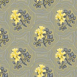 Yellow Tabebuia Trumpet Tree Flowers