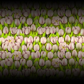 Skagit Tulips Soft Pink (BlackOmbre)