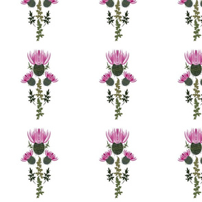Milk Thistle Print honey plant