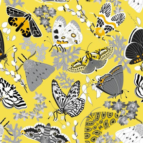 Lovely Lepidoptera - Yellow & Gray