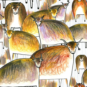 Ox Herd 2021 large scale