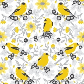 American Goldfinch and flowers!