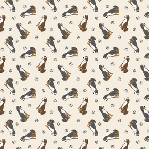 Tiny Appenzeller Sennenhund - tan