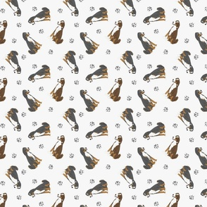 Tiny Appenzeller Sennenhund - gray