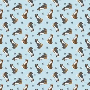Tiny Appenzeller Sennenhund - blue