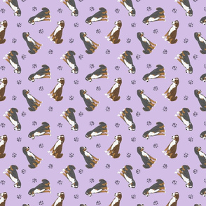 Tiny Appenzeller Sennenhund - purple