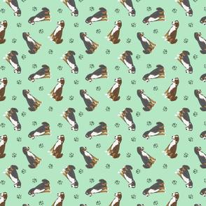 Tiny Appenzeller Sennenhund - green