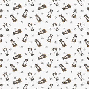 Tiny Entlebucher mountain dog - gray