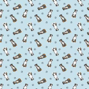 Tiny Entlebucher mountain dog - blue