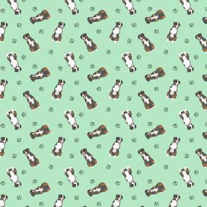 Tiny Entlebucher mountain dog - green