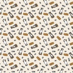 Tiny Entlebucher mountain dog - barn hunting
