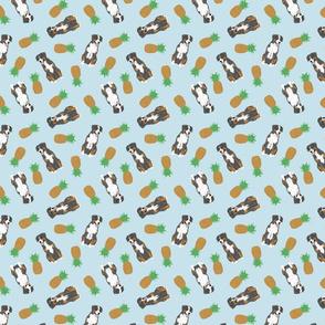 Tiny Entlebucher mountain dog - pineapples