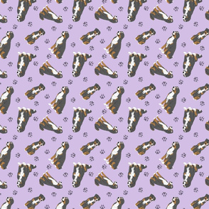 Tiny assorted Sennenhund Mountain dogs - purple