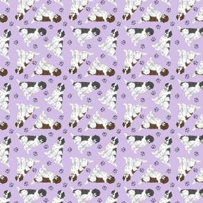 Tiny Landseer Newfoundlands - purple