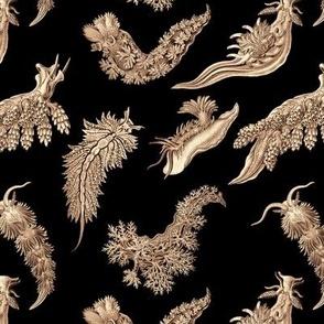Ernst Haeckel Sepia Nudibranch on Black