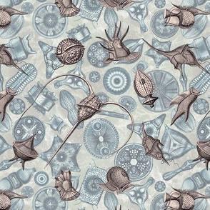 Ernst Haeckel Lavender Gray Peridinium over Cerulean Diatom