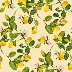 Lemon tree (Yellow)