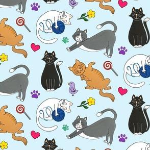 kutie kitties blue